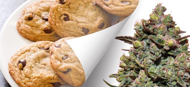 Cookies Kush Barney's Farm