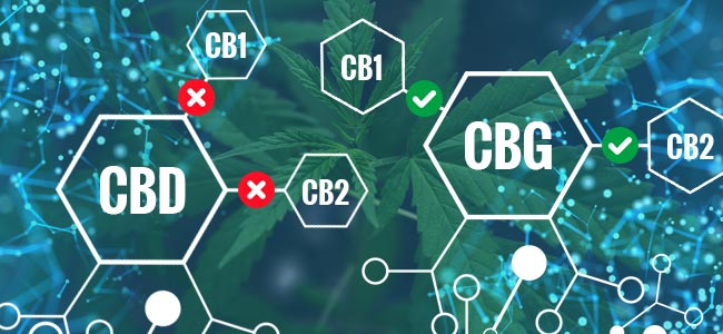 ¿Qué Diferencias Hay Entre El CBG Y El CBD?