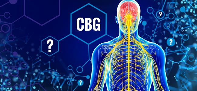 ¿Qué Efectos Tiene El CBG?