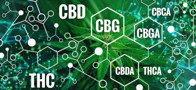 ¿Qué Es El CBG?