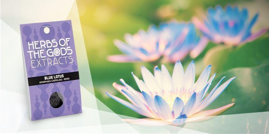 Lotus Azul