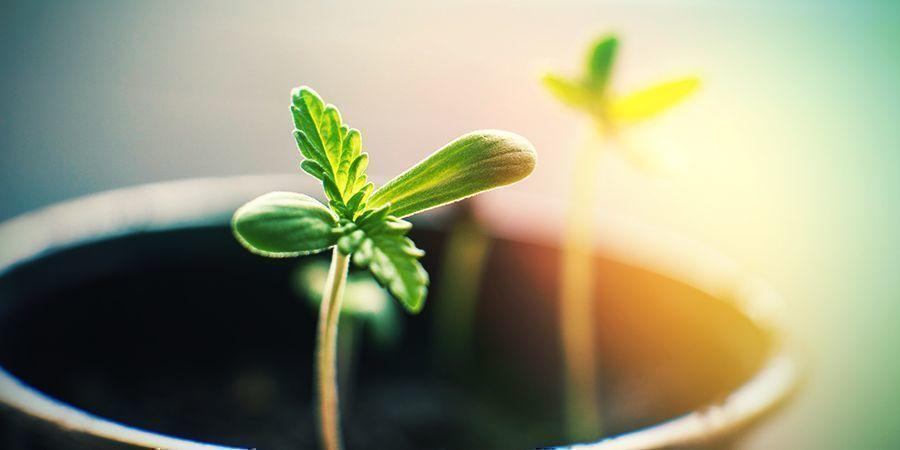 Qué Puedes Hacer En Un Cultivo Interior