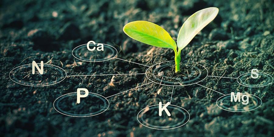 Compra Fertilizantes