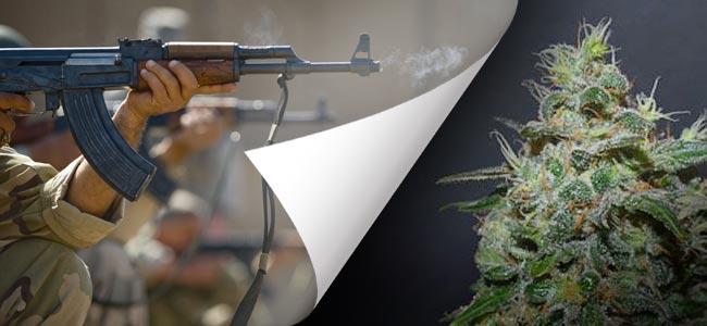 AK Kush (Kalashnikov Seeds)