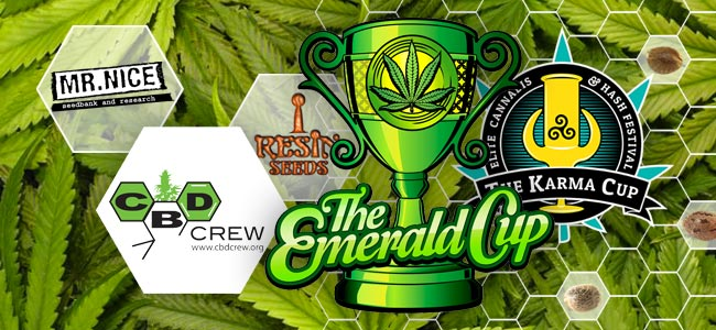 SEEDBANK OF THE MONTH   CBD Crew