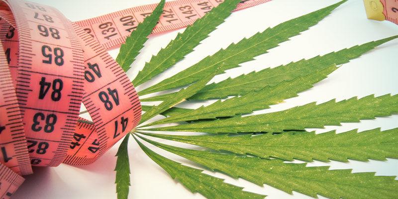 ¿Puede La Marihuana Ayudarte A Adelgazar?