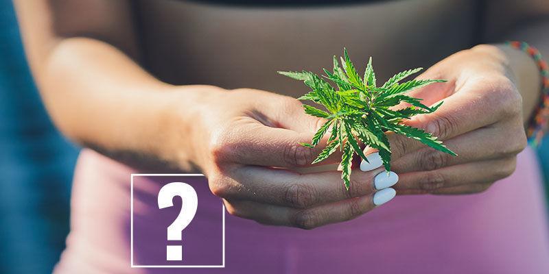 Marihuana Y Pérdida De Peso