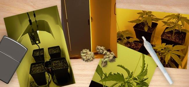Sticky Beast Automatic: Crecimiento Vegetativo