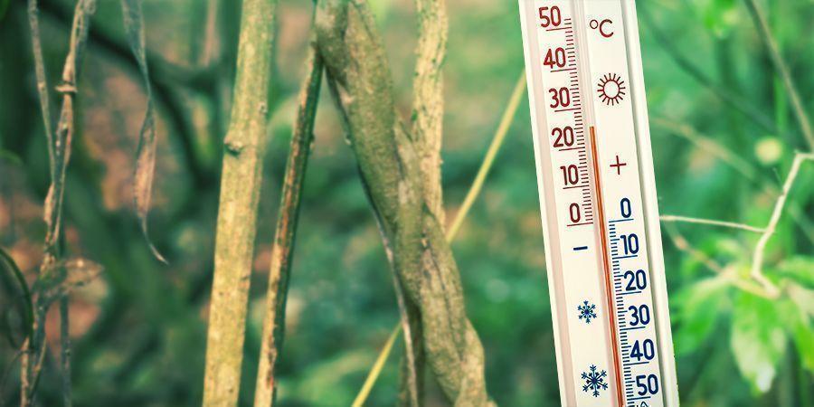 Crea Un Entorno De Cultivo Cálido Y Húmedo - Banisteriopsis Caapi