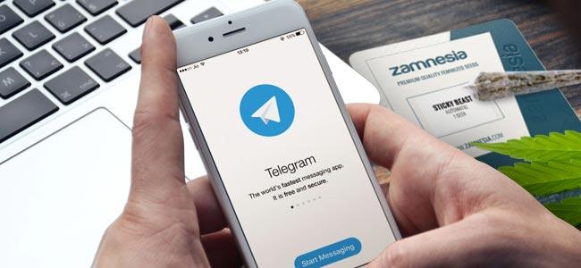¿POR QUÉ SEGUIR A ZAMNESIA EN TELEGRAM?