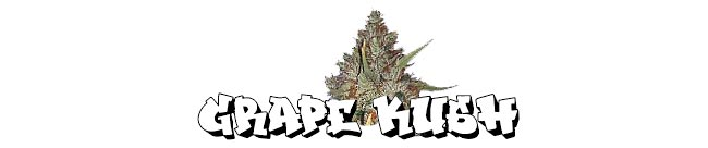 Grape Kush - Cali Connection
