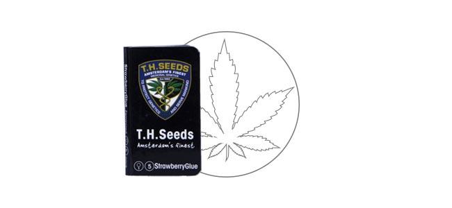 Strawberry Glue - T.H. Seeds