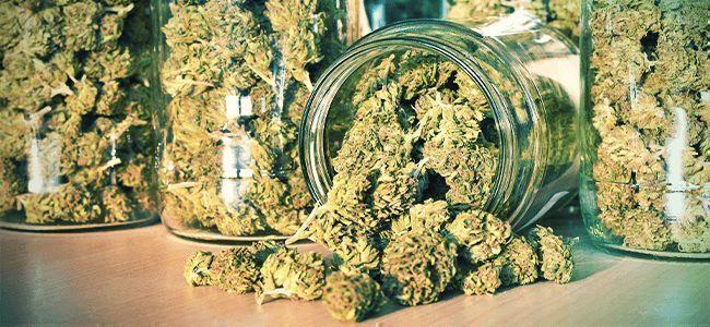 Errores Del Fumeta: La Hierba Correctamente