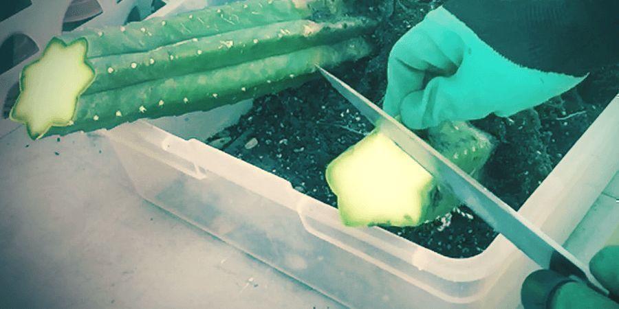No Tengas Miedo A Cultivar Suculentas
