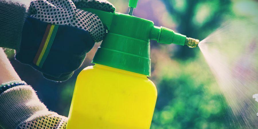 Los Insecticidas Podrían Causar Fototoxicidad