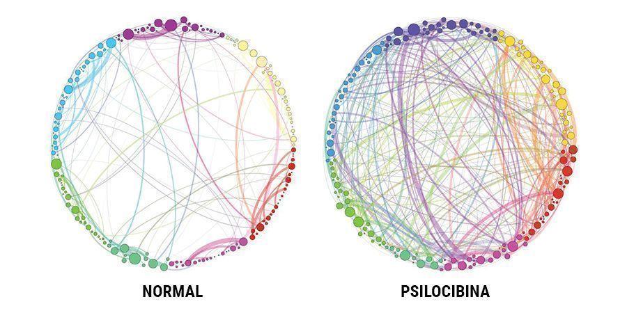 ¿QUÉ HACE LA PSILOCIBINA?