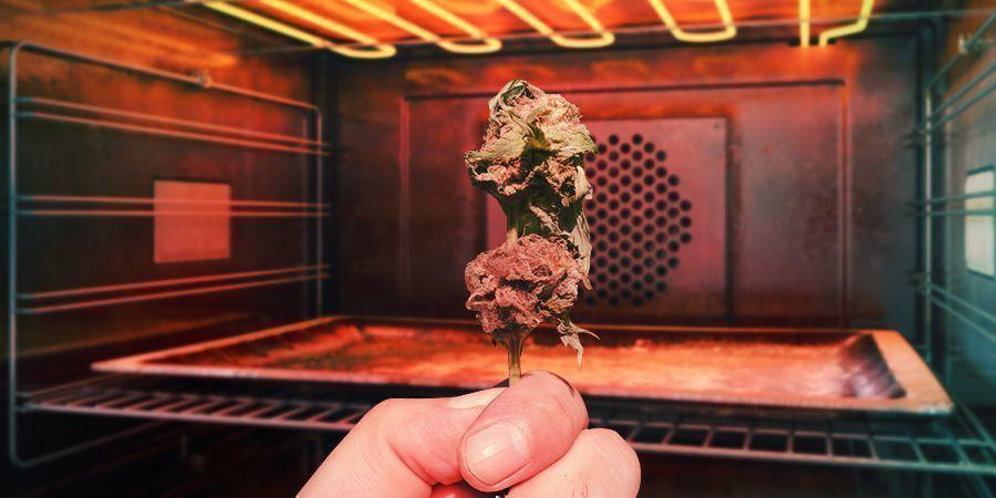 ¿Se Puede Salvar El Cannabis Mohoso?