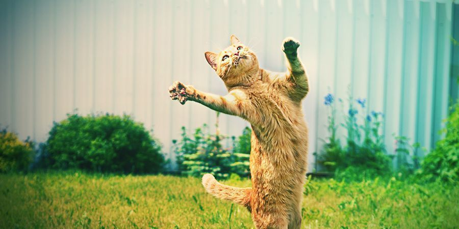 Gatos Que Les Encanta Colocarse - Menta De Gato