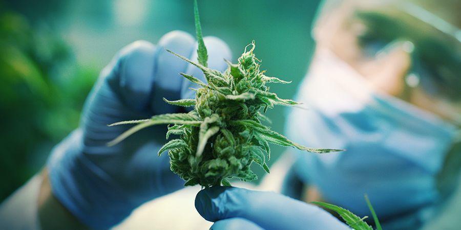 La Percepción Del Cannabis