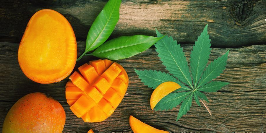 Consume Cannabis Con Un Poco De Mango