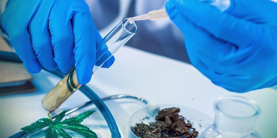 THC: un medicamento poderoso y natural