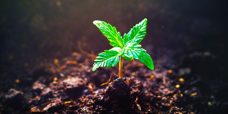 También Existen Otras Plantas