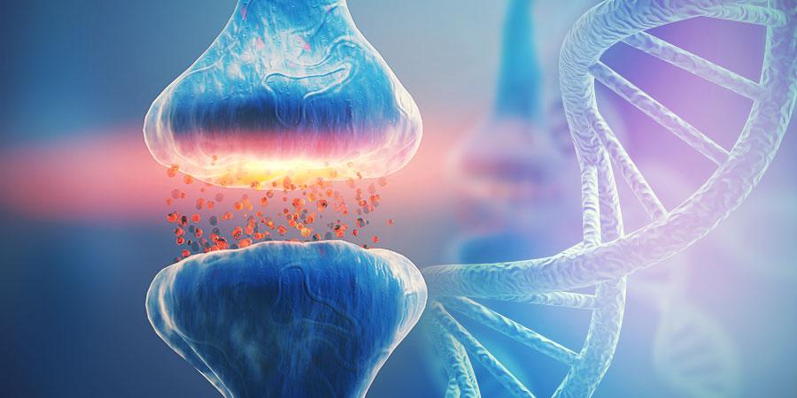 EL ADN Y EL SISTEMA ENDOCANNABINOIDE