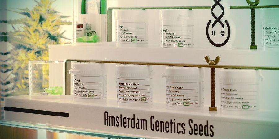 BANCO DE SEMILLAS DEL MES: AMSTERDAM GENETICS