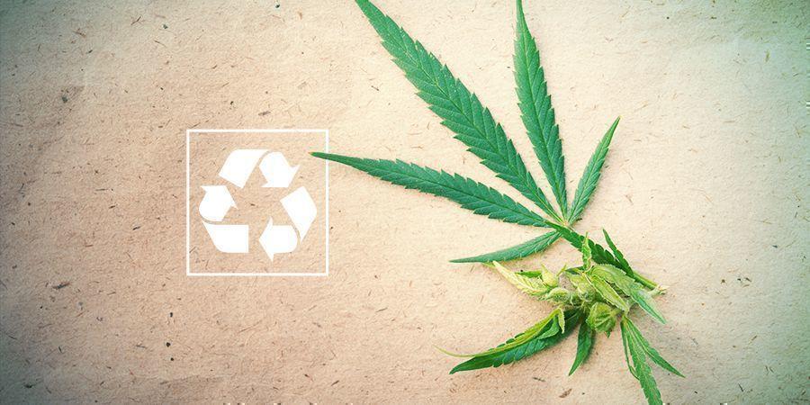 Marihuana Y Medioambiente