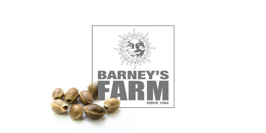 Acapulco Gold (Barney's Farm)