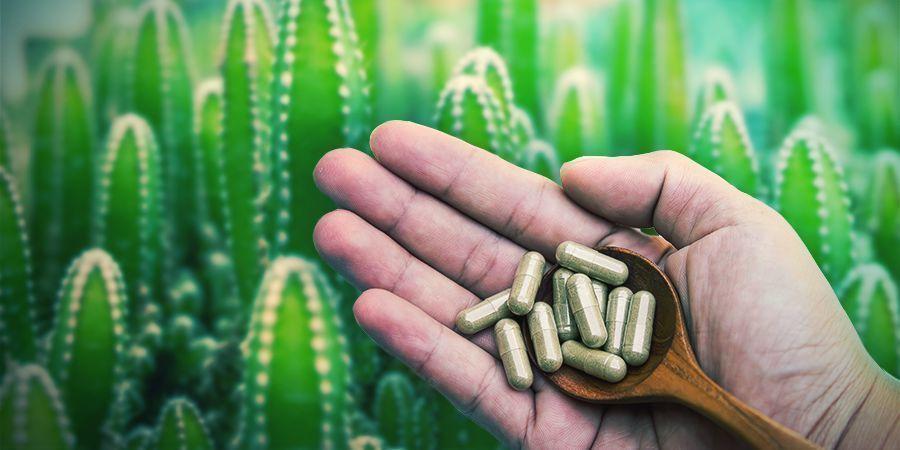 La Mescalina Está Disponible En Micropuntos O Microdosis