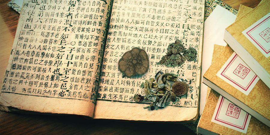 Cannabis, Setas, Ayahuasca, Peyote - Medicinas Antiguas Y Guías Espirituales