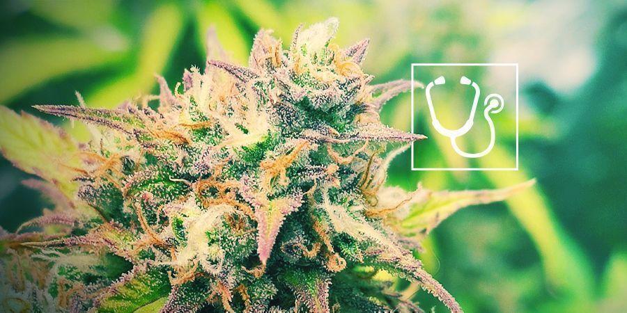 ¿Es Un Derecho Humano El Acceso Al Cannabis Medicinal?