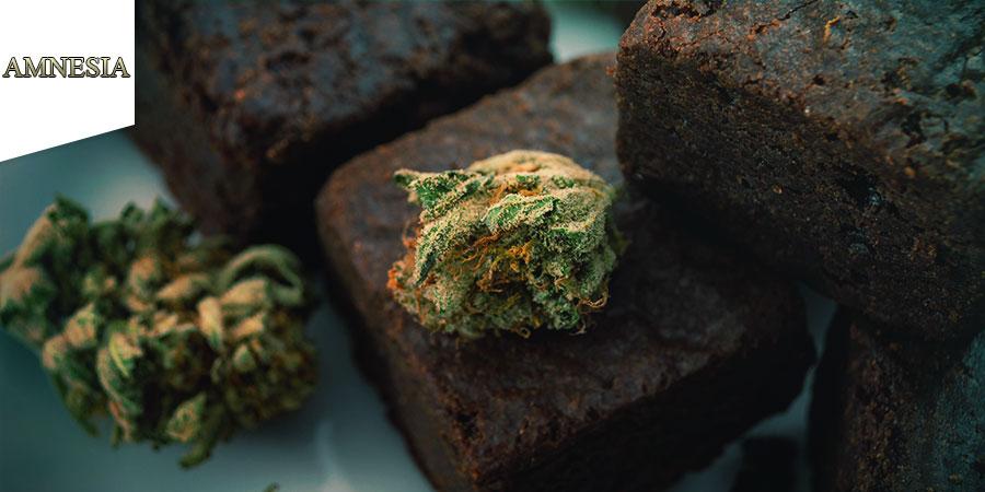 Coffeeshop Amnesia Amsterdam - Comestibles De Cannabis