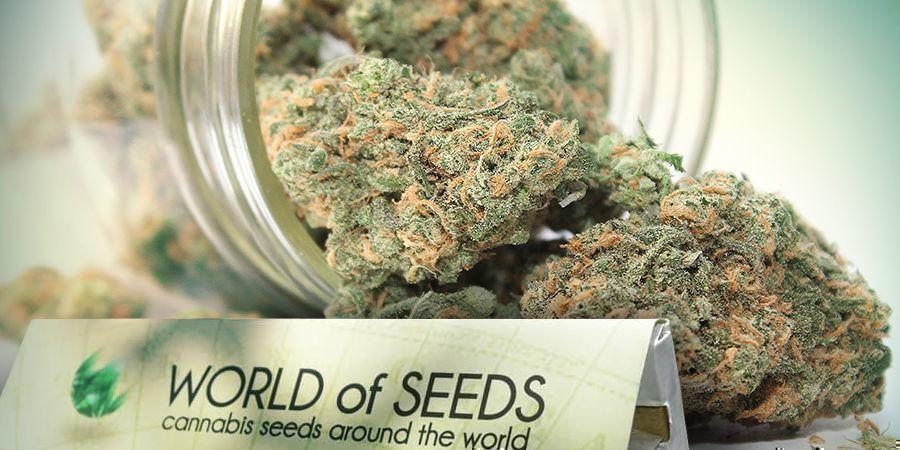 World Of Seeds - Genética Para Todos Los Gustos