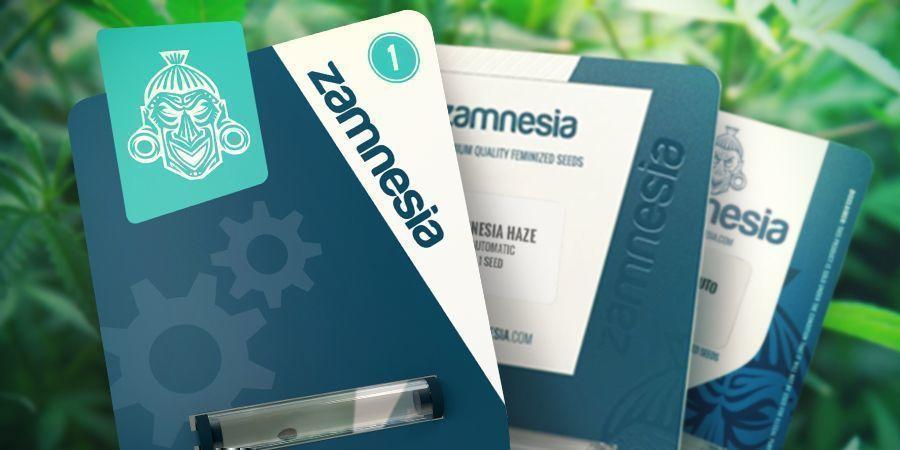 Zamnesia Seeds: Comienzos Humildes