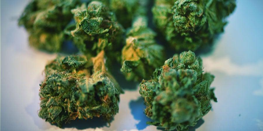 ¿Qué Pasa Si No Cuidas Bien Los Cogollos De Cannabis?