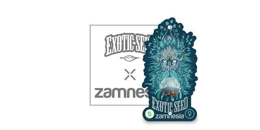 Black Zkittlez (Exotic Seed X Zamnesia) Feminizada