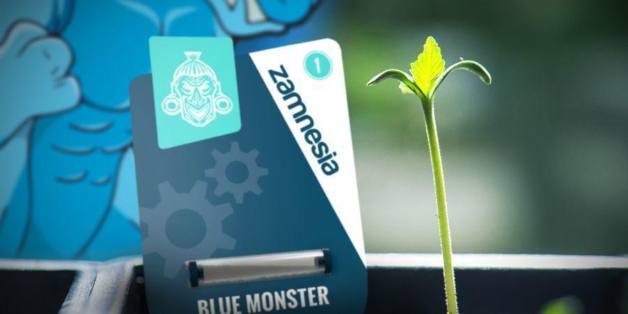 Cultivo De Blue Monster Automatic