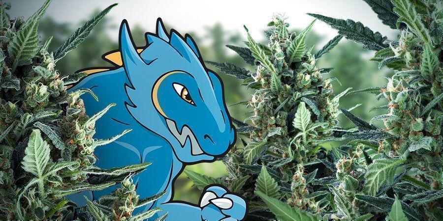 Saluda A La Blue Monster Automatic