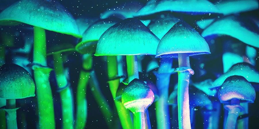 Distancia Entre Las Luces Y El Sustrato De Setas Mágicas