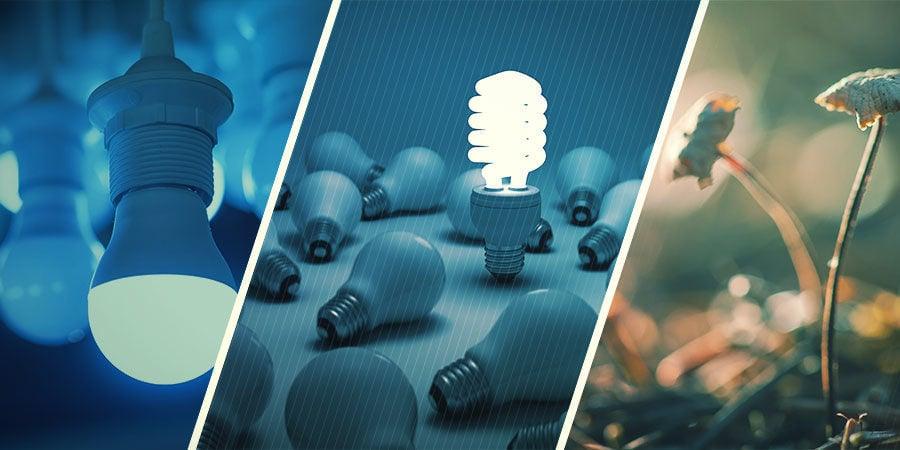 ¿Qué Tipo De Luz Funciona Mejor Para Las Setas Mágicas?