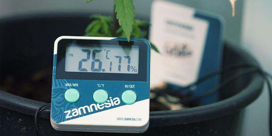 Termómetro/Higrómetro para marihuana