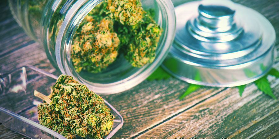 ¿Debes Estimular Tu Sistema Endocannabinoide Con Cannabis?