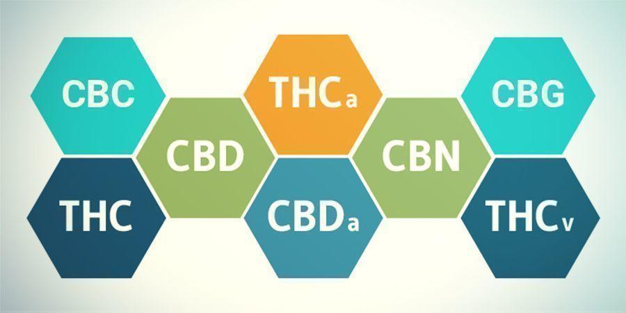 ¿Qué Ocurre Con Los Cannabinoides Distintos Al THC?