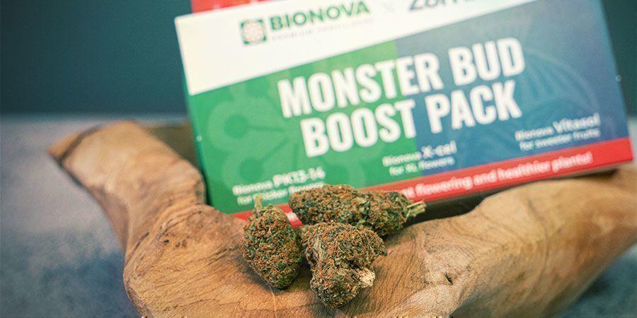 ¿Qué Es el Monster Bud Boost Pack?