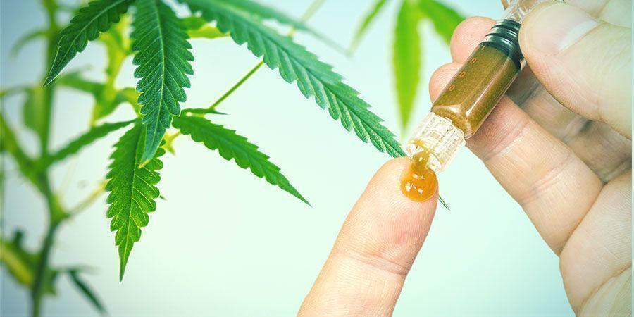 Beneficios De Las Raíces Del Cannabis
