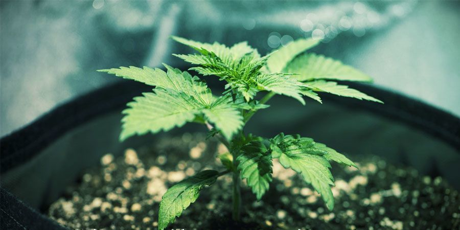 Drenaje - Cultivo De Plantas De Marihuana