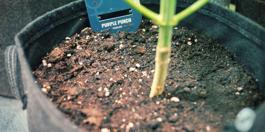 Flexibilidad - Cultivo De Plantas De Marihuana