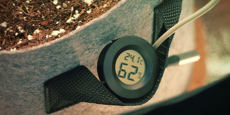 Temperatura - Cultivo De Plantas De Marihuana